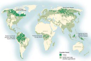 ontbossing-tropisch-regenwoud