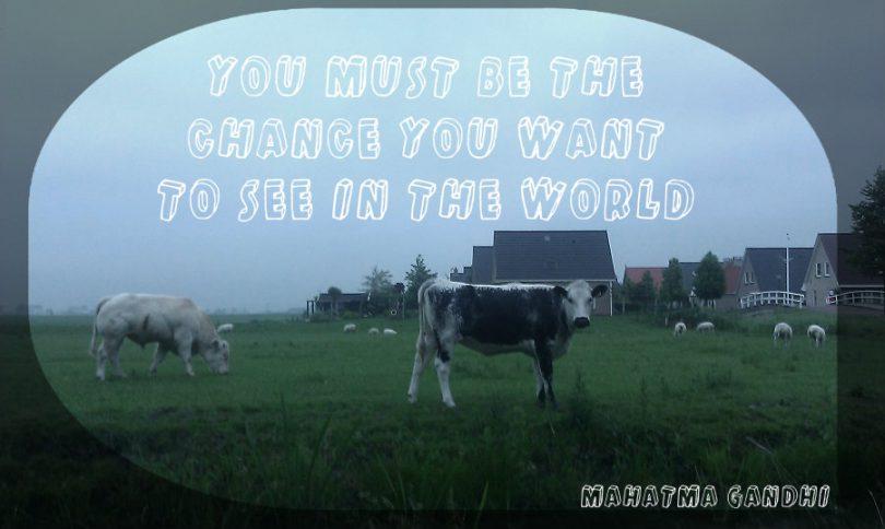 koeien en schapen