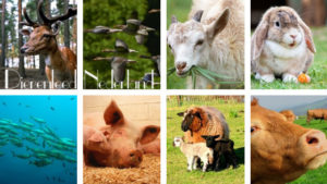 Dierenleed in Nederland
